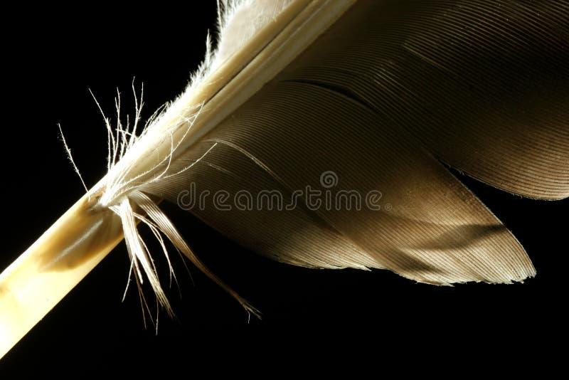 Macro Feather Stock Image