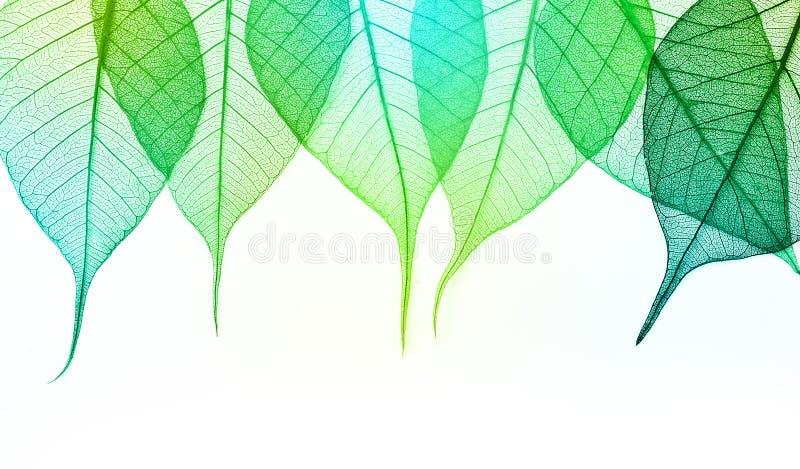 Macro feuilles de vert image stock