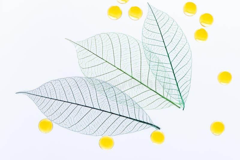 Macro feuilles et boules squelettisées d'huile cosmétique sur un fond blanc photographié dans la lumière Vue supérieure décorativ photo stock