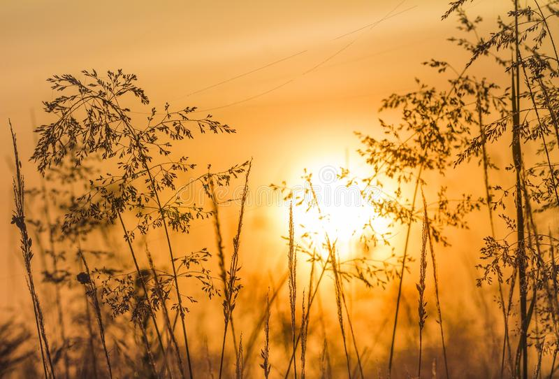 Filigree Grasses at beautiful sunrise. Macro of filigree Grasses at beautiful sunrise royalty free stock photography