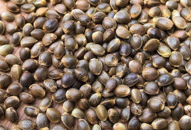 Macro fin des graines de chanvre de cannabis photo stock