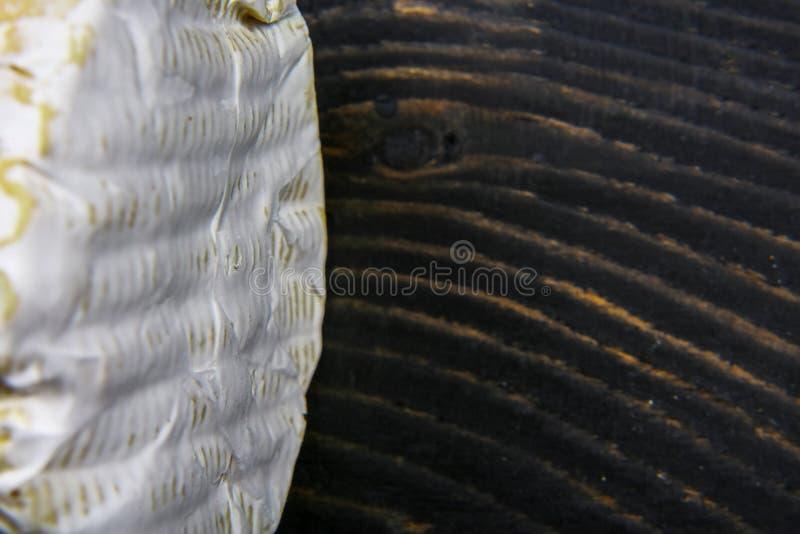 Macro fine del camembert o del brie del formaggio su struttura su fondo di legno Produzione di latte Immagine di vista superiore  fotografia stock libera da diritti