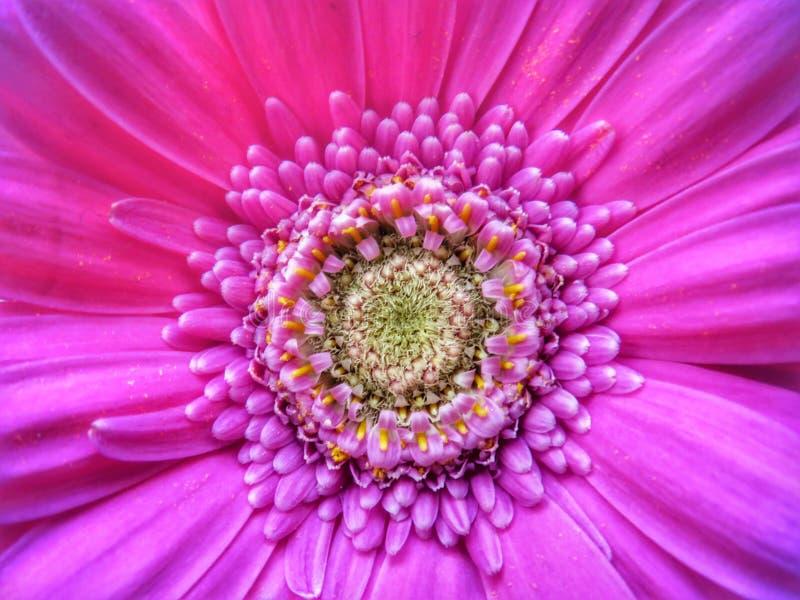 Macro fine del fiore su fotografie stock libere da diritti