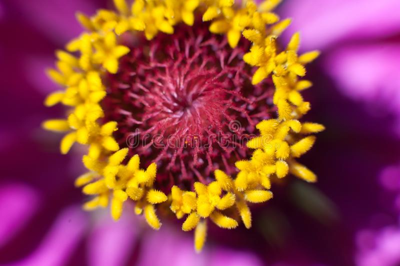 Macro fiore alla luce solare fotografia stock libera da diritti