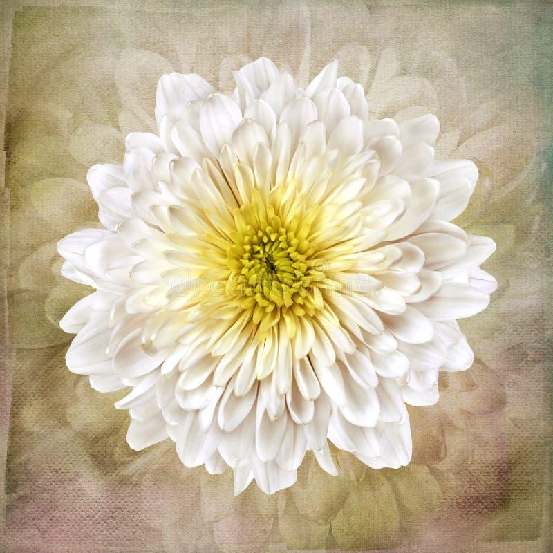 Macro fiore bianco sulla carta da parati d'annata di arte illustrazione vettoriale
