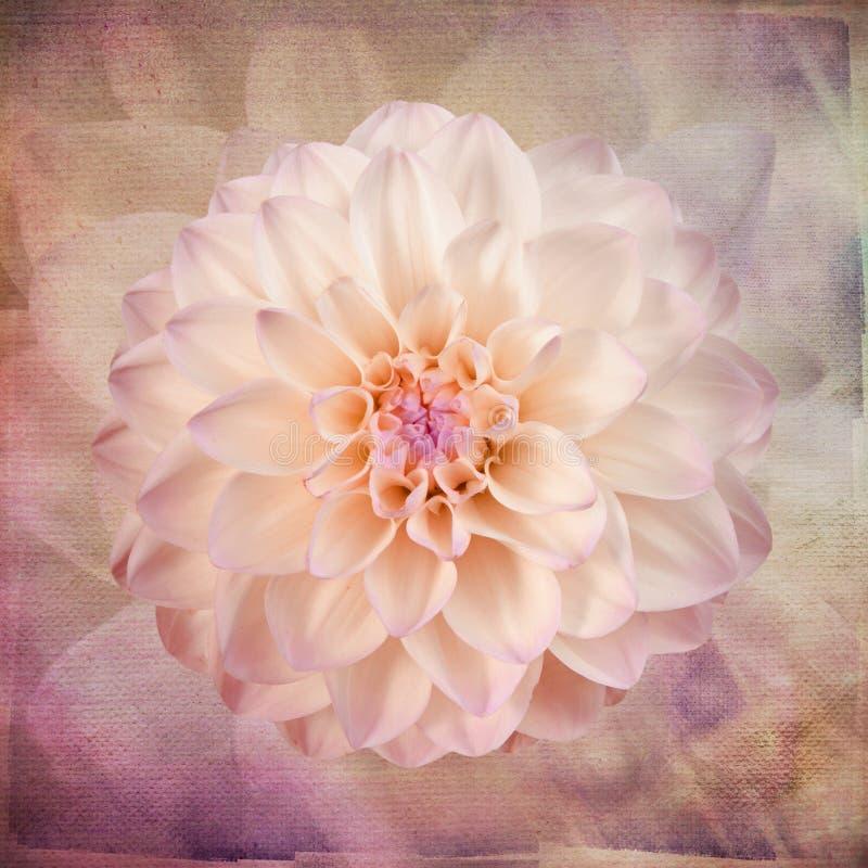 Macro fiore rosa sulla carta da parati d'annata di arte royalty illustrazione gratis