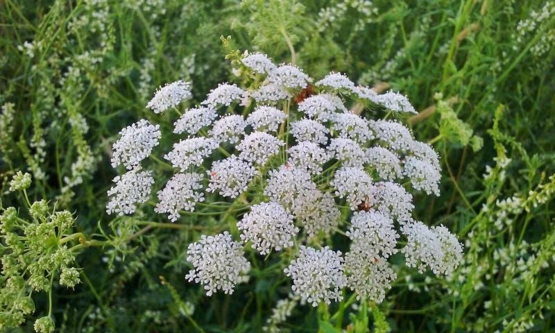 Macro fiori immagini stock