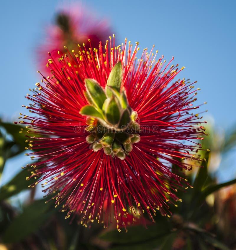 Macro fleur photos stock