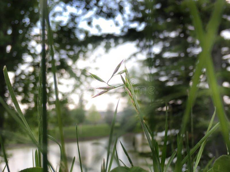 Macro fleur photo libre de droits