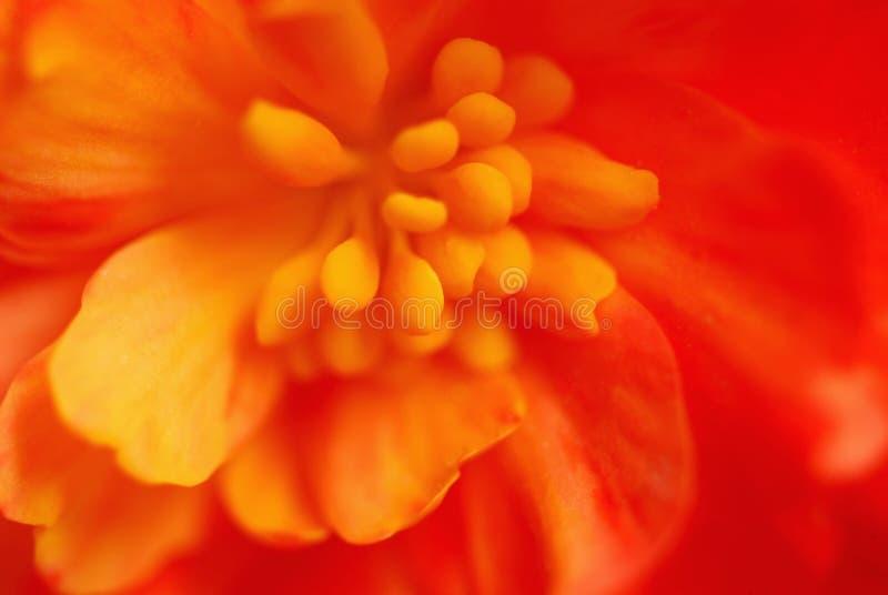 Macro fleur extrême images libres de droits