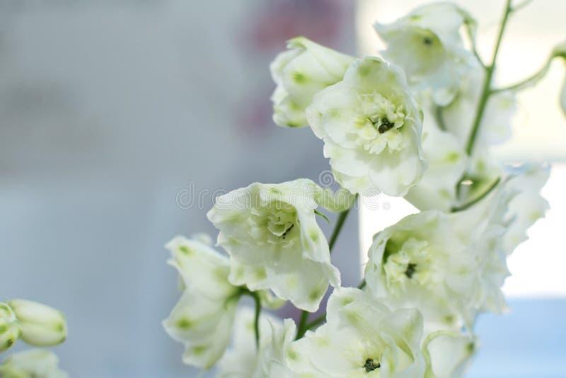 Macro fleur fraîche sensible de delphinum de wthite épouser la décoration de fleurs fraîches images stock