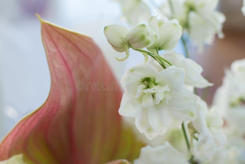 Macro fleur fra?che sensible de delphinum de wthite ?pouser la d?coration de fleurs fra?ches photos stock