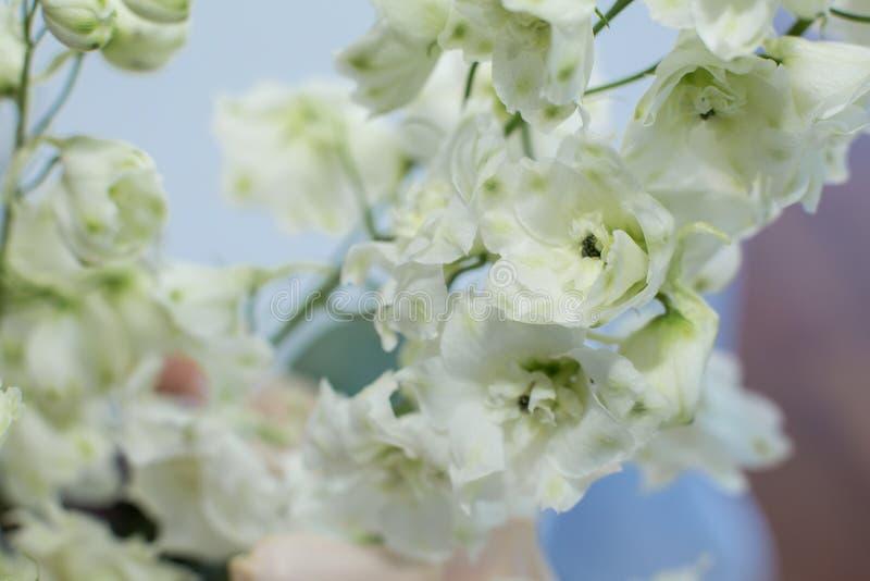 Macro fleur fra?che sensible de delphinum de wthite ?pouser la d?coration de fleurs fra?ches photo stock