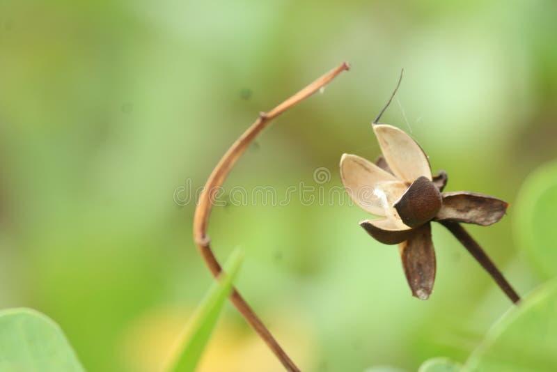 Macro fleur morte photo stock