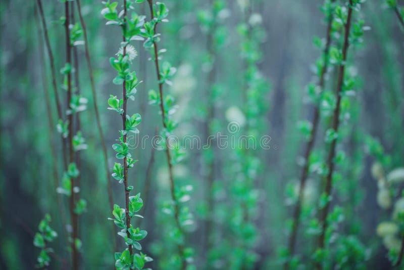 macro fleurs vertes molles image libre de droits
