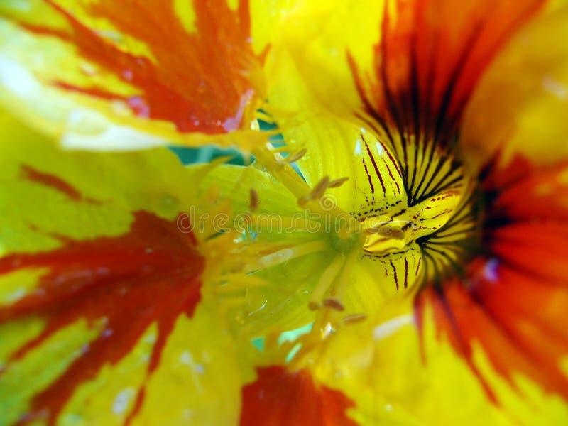 MACRO FLOWER stock photos
