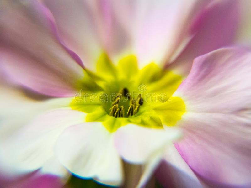 Macro flower close-up on the center with shallow depth of focus.  stock photo