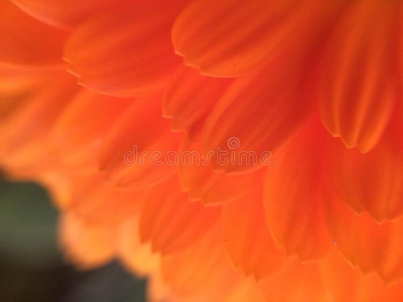 Macro flower plant background petal stock photos
