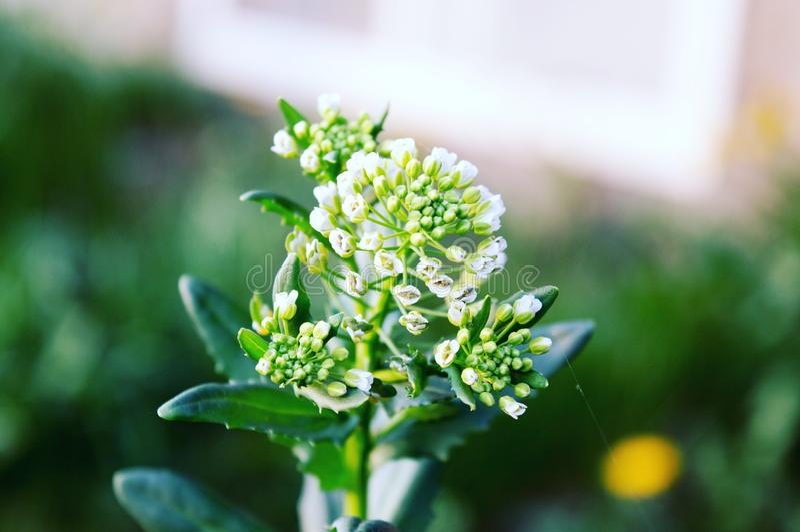 Macro flower shot royalty free stock photo