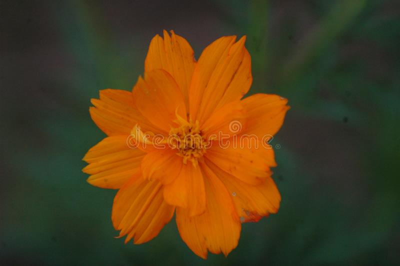 focus in flowers royalty free stock photo