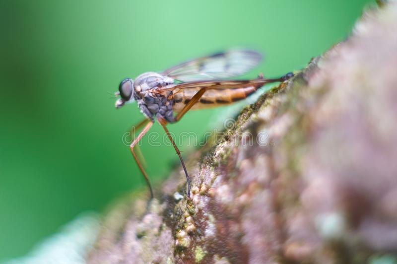 Download Macro fly stock image. Image of resting, animal, background - 14856669