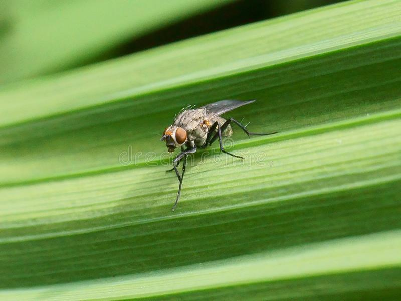 Macro of fly on a green leaf stock photos
