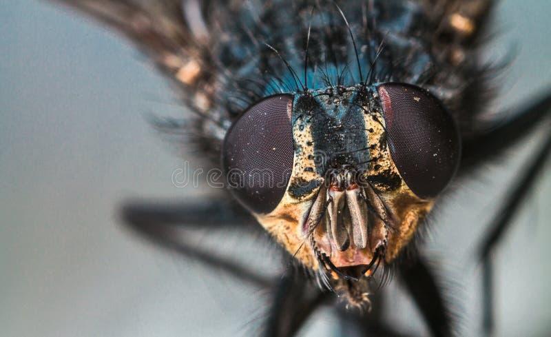 Macro fly portrait stock photos