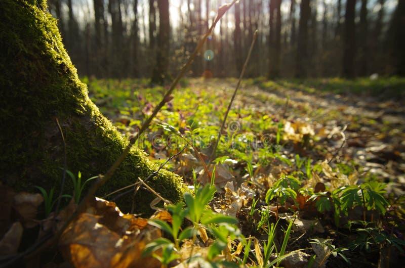 Macro foresta immagine stock libera da diritti
