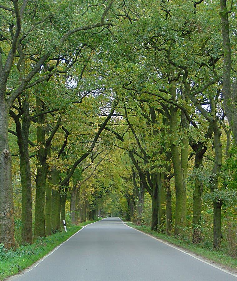 Macro foto con gli alberi ornamentali nei precedenti del paesaggio, la strada principale di prospettiva fotografia stock