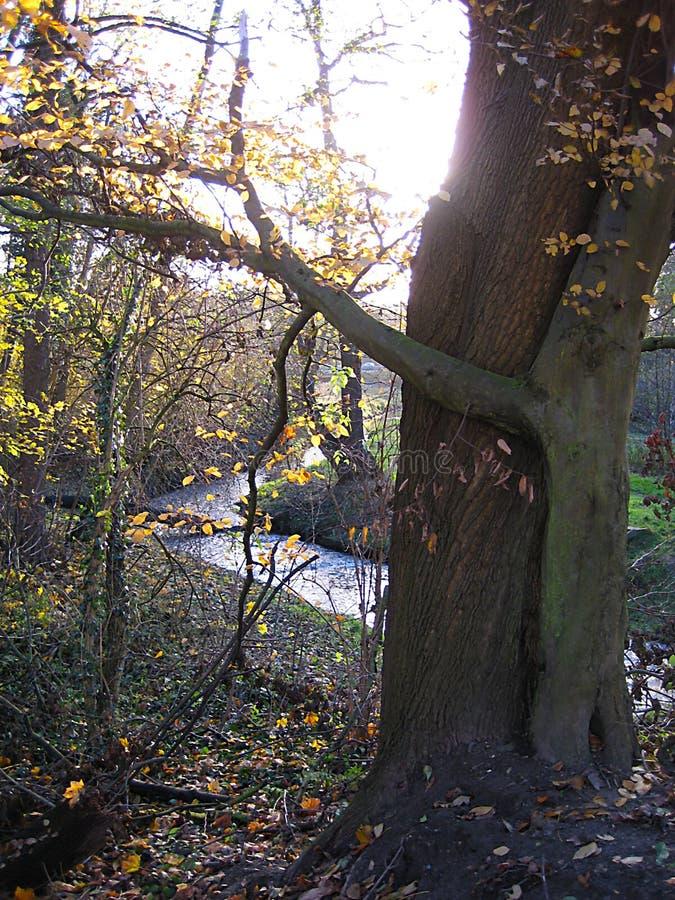 Macro foto con il fondo di autunno del paesaggio con la prospettiva di un fiume rurale e degli alberi immagini stock