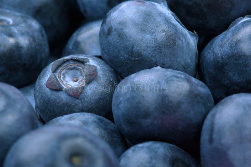 Macro foto dei mirtilli organici e dolci come fondo Bacche salutari e fresche per i dessert o i frullati fotografia stock libera da diritti