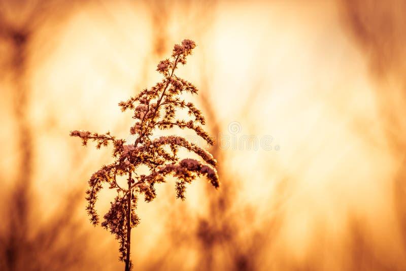 Macro foto del primo piano dettagliato di una pianta congelata alla mattina soleggiata di inverno con copia-spazio fotografie stock libere da diritti