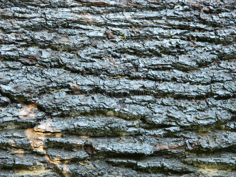 Macro foto della corteccia di albero fotografie stock libere da diritti