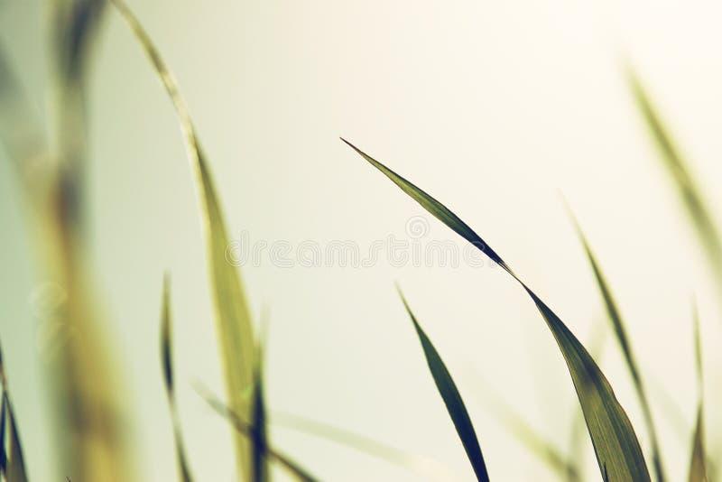 Macro foto di erba fresca retro immagine filtrata immagine stock libera da diritti