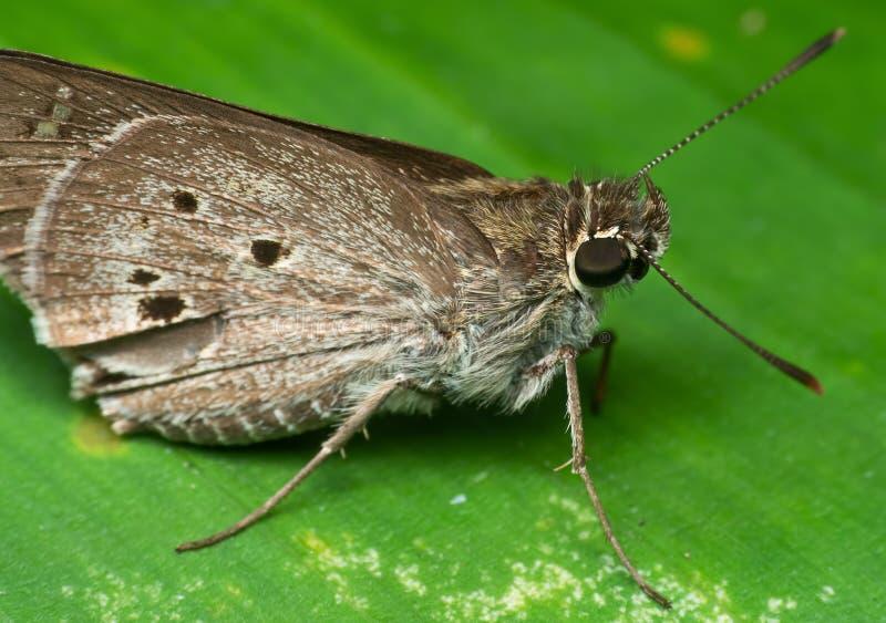 Macro Foto van Little Brown Butterfly op Green Leaf royalty-vrije stock foto's