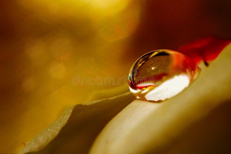 Macro fotografia di un waterdrop su un petalo del fiore fotografia stock libera da diritti