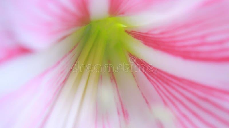 Macro fotografie stock afbeeldingen