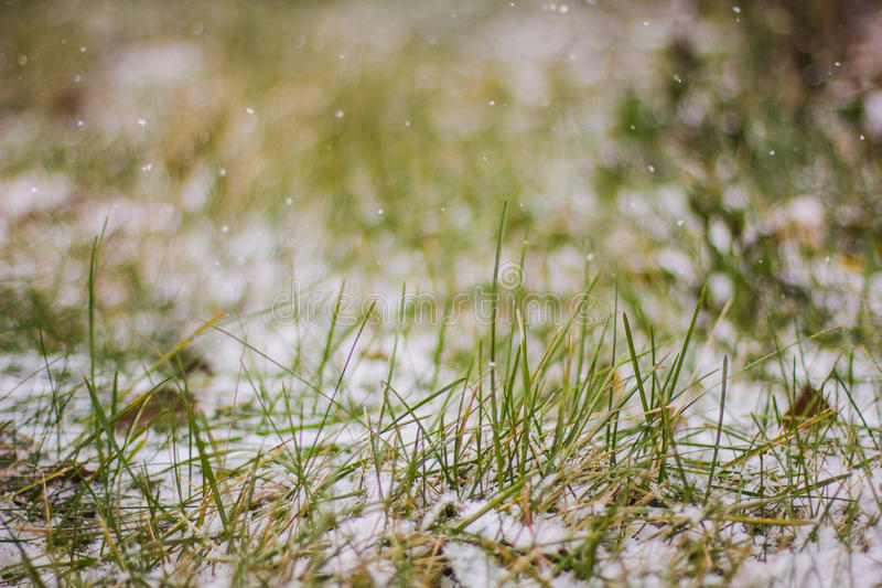 Macro of fresh green grass covered with snow royalty free stock photography