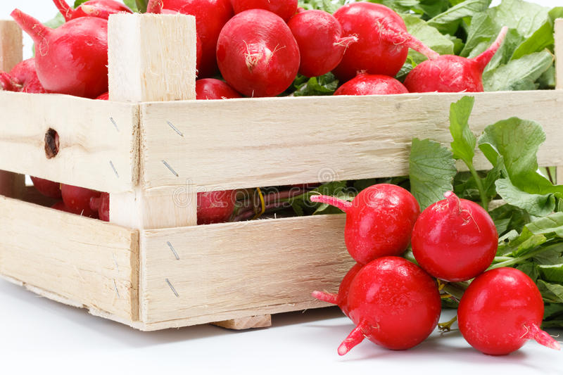 Macro of fresh red radish in crate stock photography