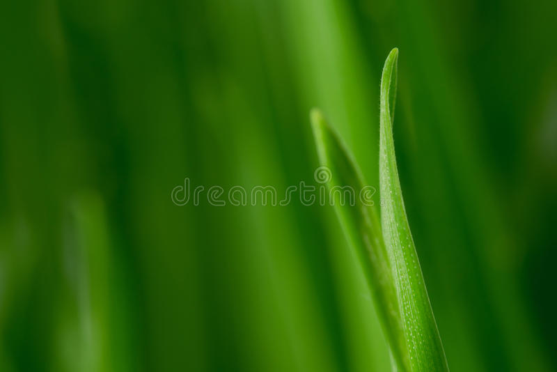 Macro grass royalty free stock images