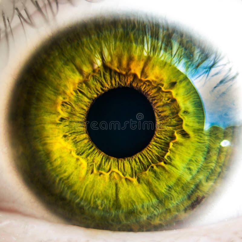 Macro of green eye royalty free stock photography