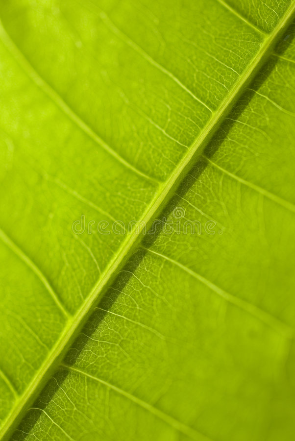 Download Macro Green  Leaf Royalty Free Stock Photos - Image: 4842218