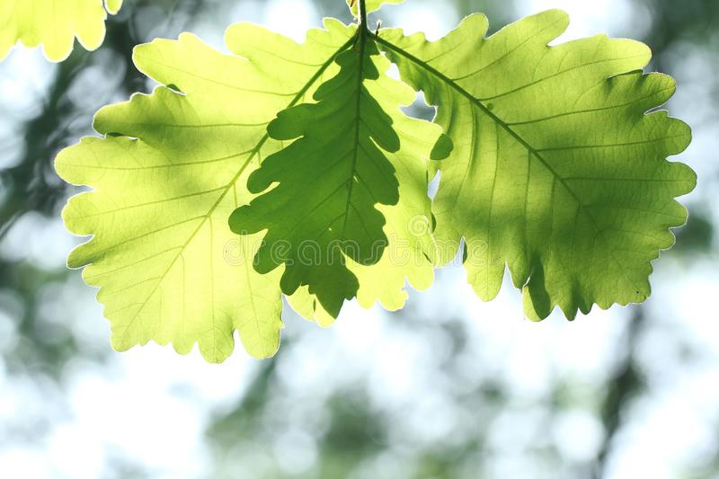 Macro of green leaves stock photography