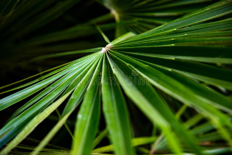 Macro of green palm leaf stock photo