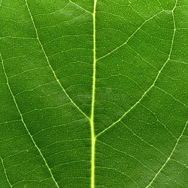 Macro groen blad royalty-vrije stock afbeeldingen
