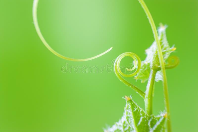 Macro groene installatie royalty-vrije stock afbeelding