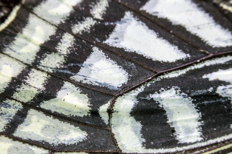 Macro haut étroit d'une aile de papillon photo stock