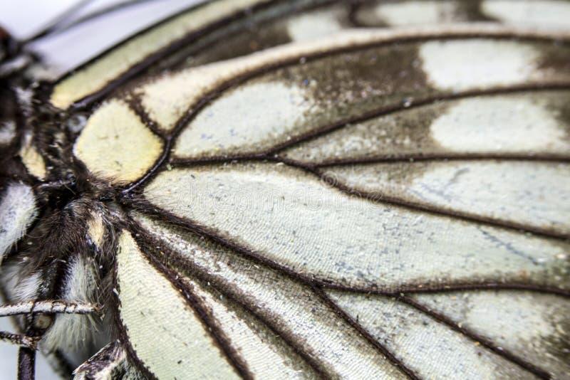 Macro haut étroit d'une aile de papillon images stock