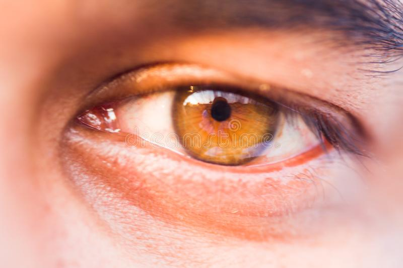 Macro of a human eye royalty free stock photography