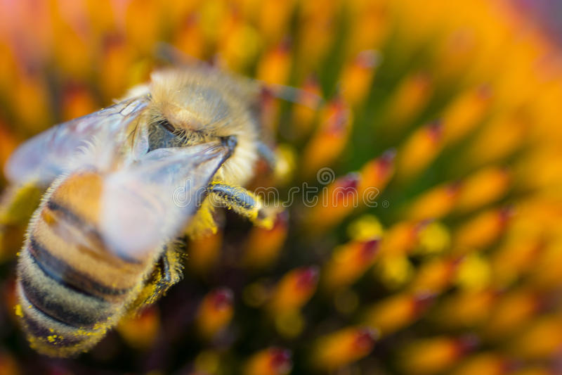 Macro image of a bee on a flower stock photos
